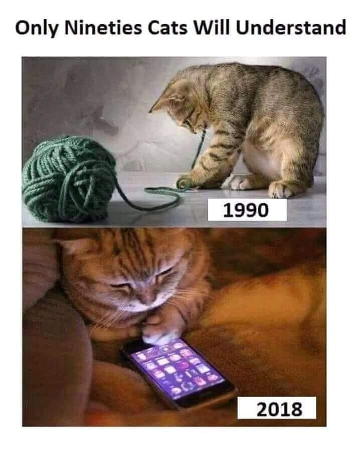 90s cat